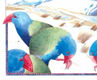 Sandra Morris illustrator New Zealand